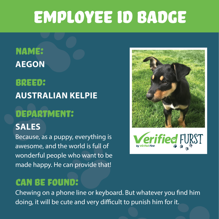 VerifiedFurst_Aegon-Australian Kelpie