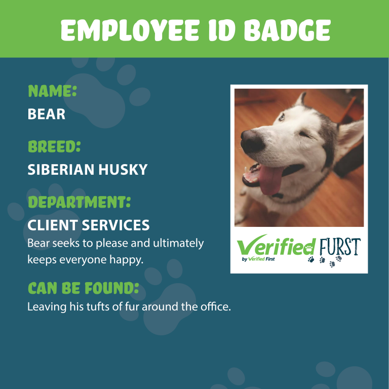VerifiedFurst_Bear-Siberian Husky
