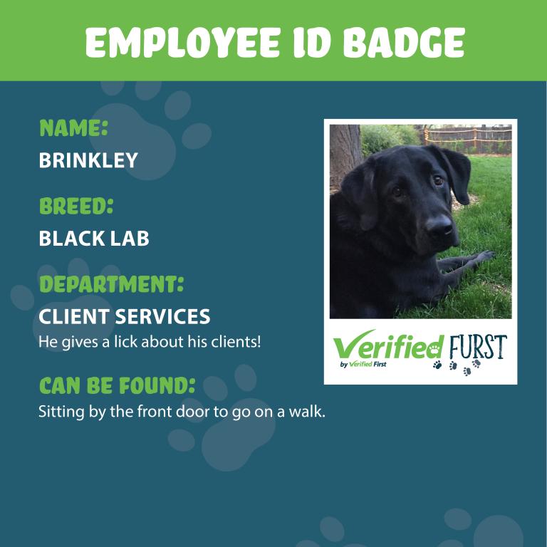 VerifiedFurst_Brinkley-Black lab