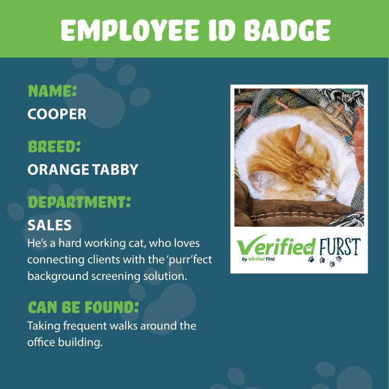 VerifiedFurst_Cooper-Orange Tabby