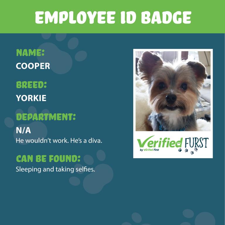 VerifiedFurst_Cooper-Yorkie