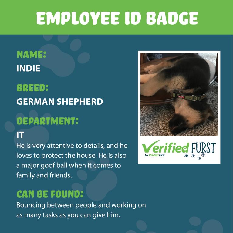 VerifiedFurst_Indie-German Shepherd