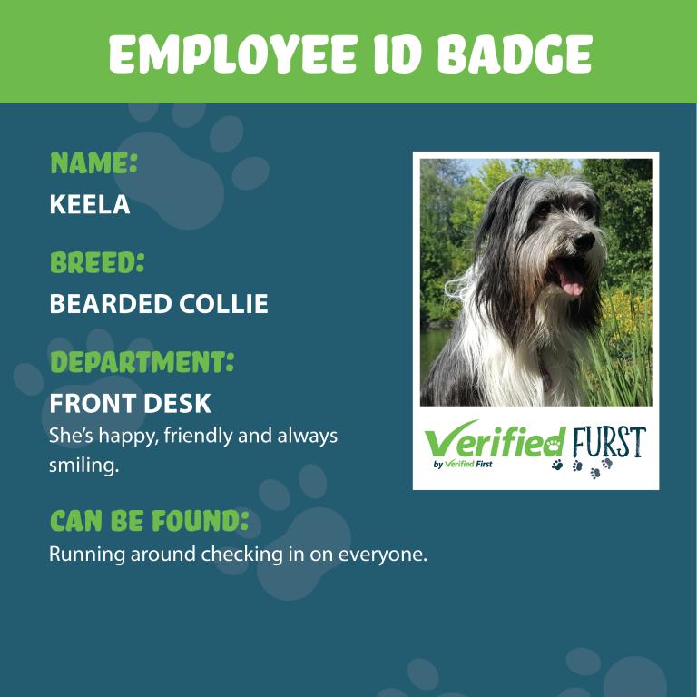 VerifiedFurst_Keela-Bearded Collie