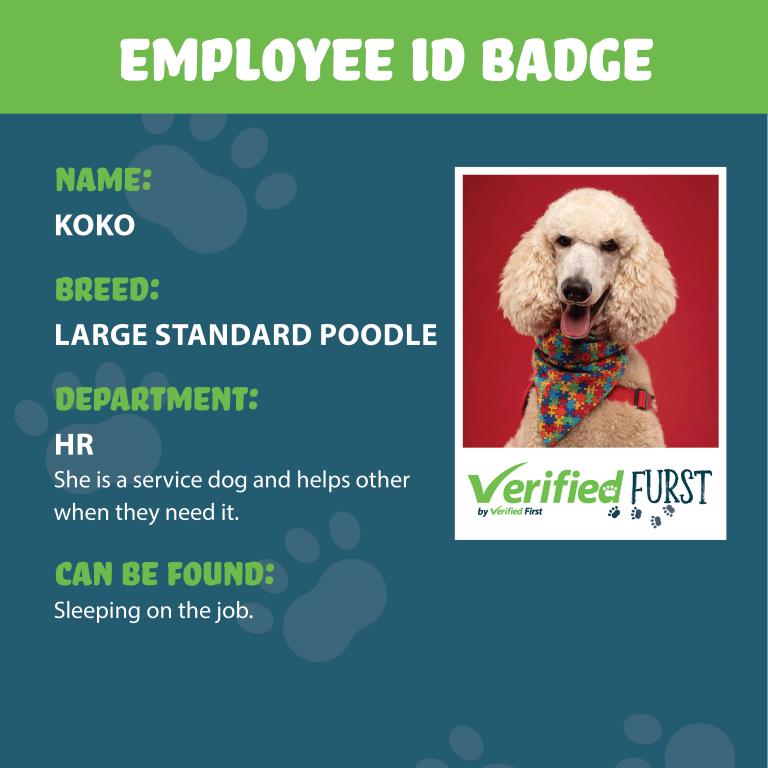 VerifiedFurst_Koko-Poodle