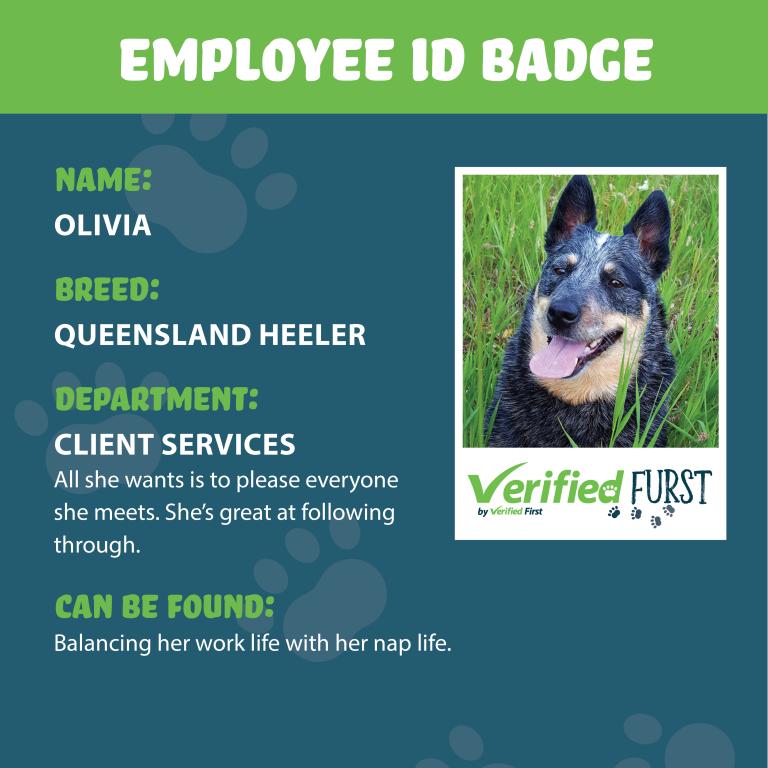 VerifiedFurst_Olivia-Queensland Heeler